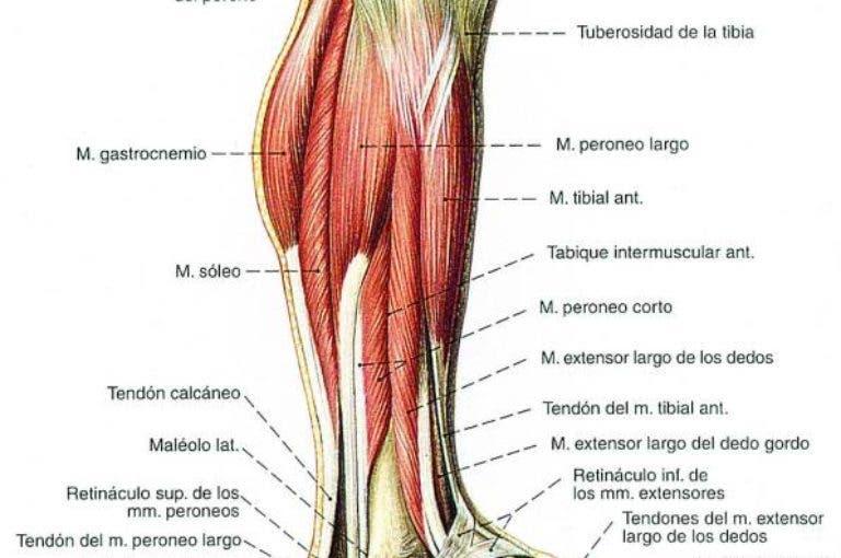 Los mejores ejercicios para pierna