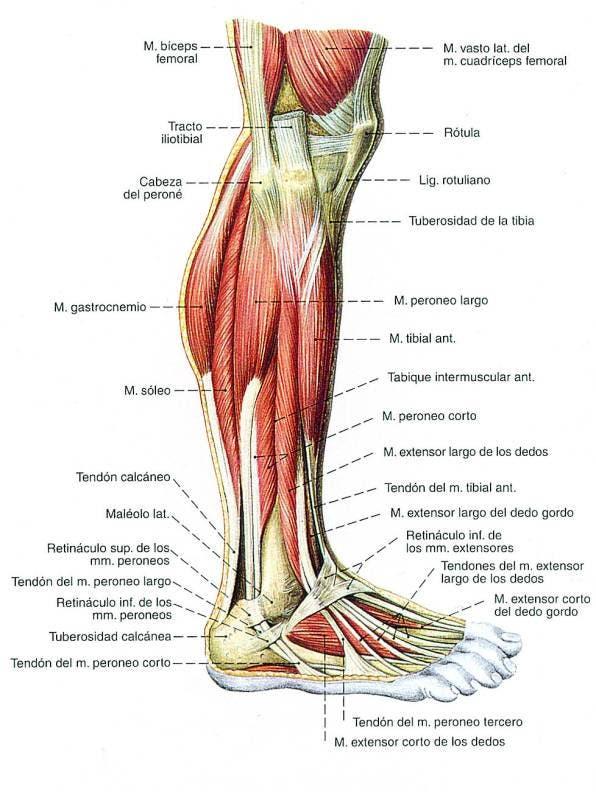 Los mejores ejercicios para pierna | Entrenamiento