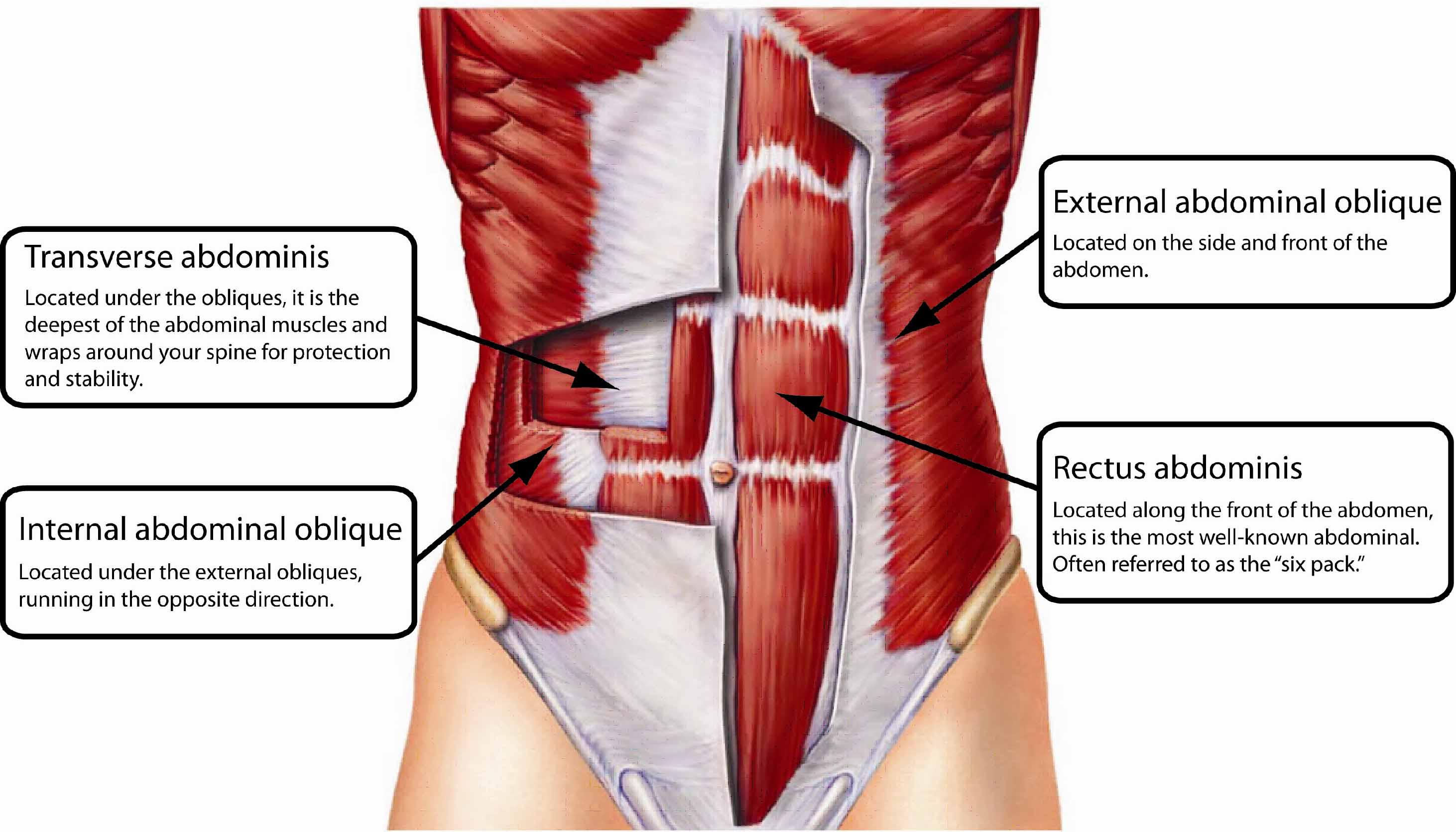 Existen los abdominales inferiores? | Entrenamiento