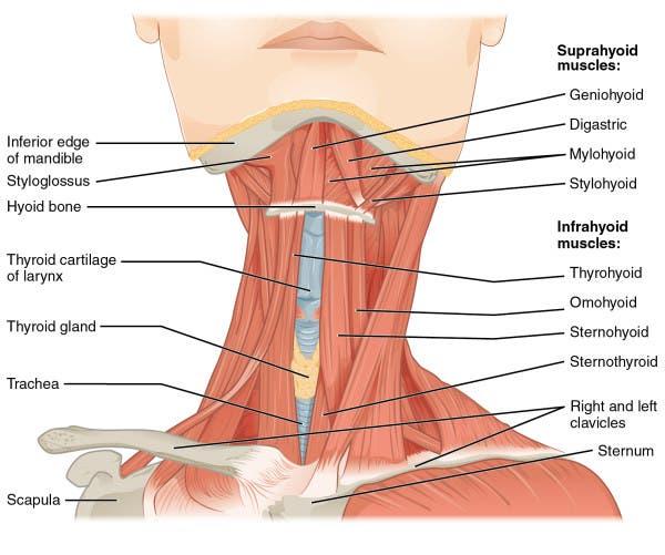 Fortalecer el cuello | Entrenamiento