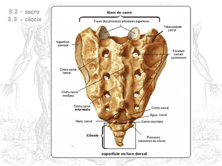 Partes y biomecánica de la columna vertebral | Entrenamiento