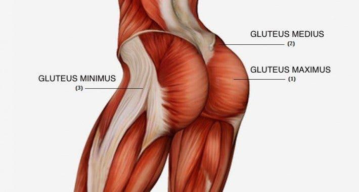 Resultado de imagen para gluteo anatomia