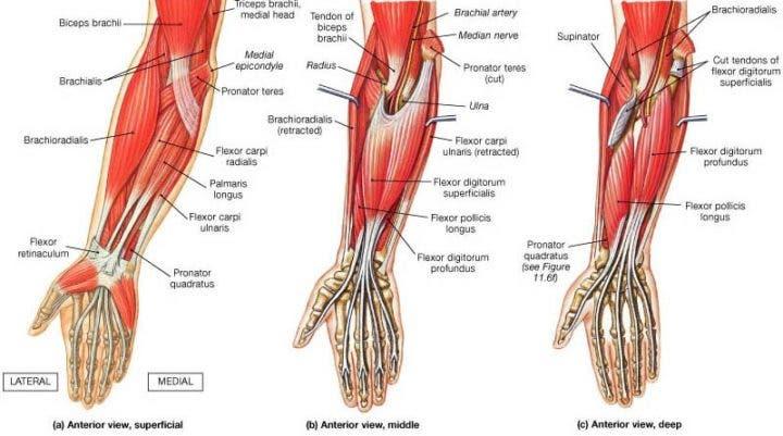 Cómo entrenar tus dedos y mejorar tu agarre | Entrenamiento