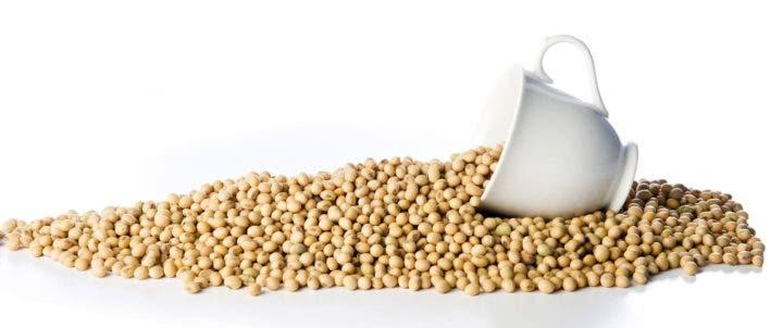 Riesgos de la soja modificada genéticamente
