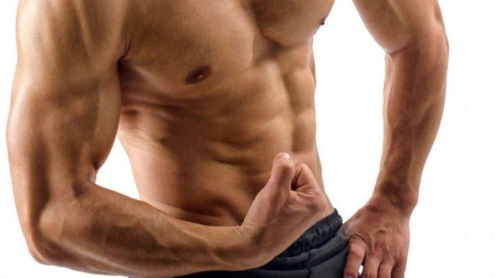 fibras que permiten la hipertrofia muscular