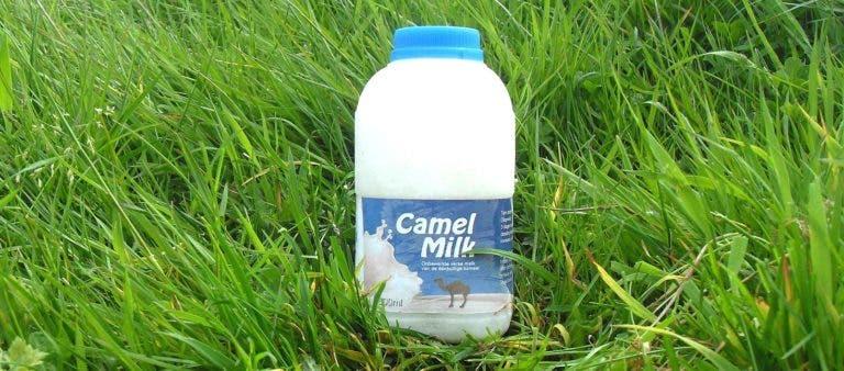 Beneficios de la leche de camella