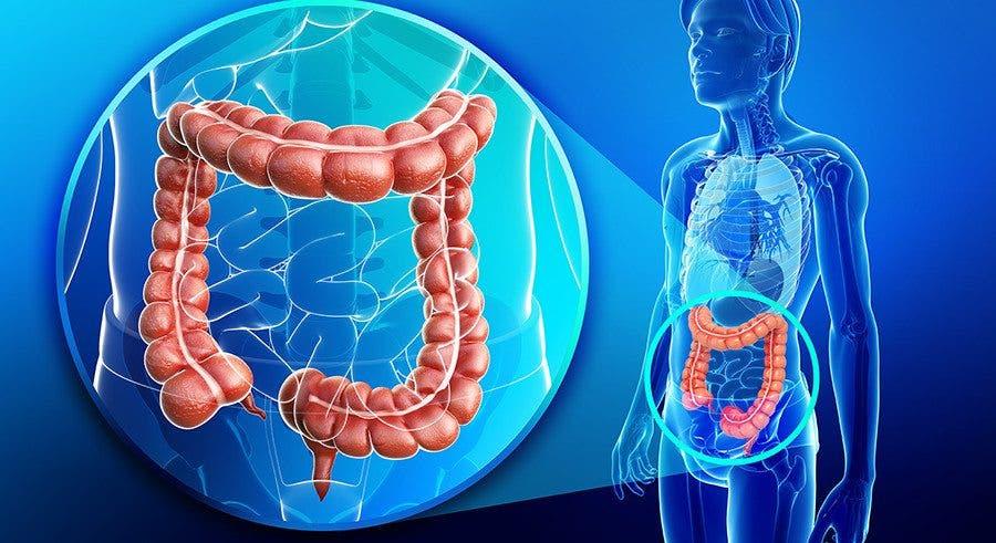 Estudios cientificos dieta para quemar grasa abdominal sin perder masa muscular las
