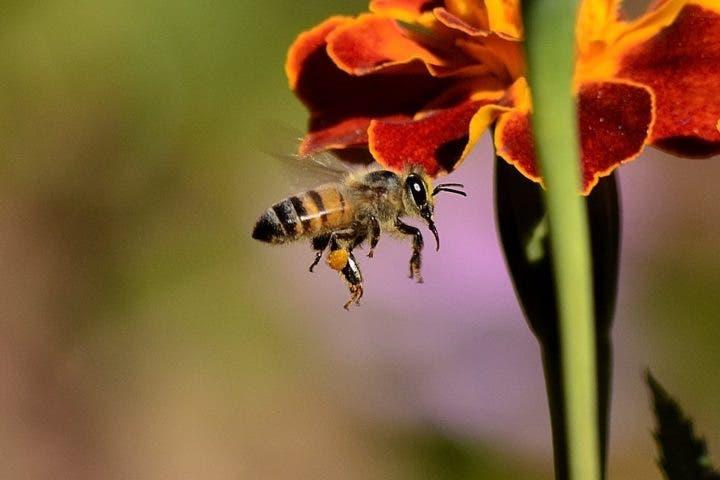 La miel es un alimento muy nutritivo