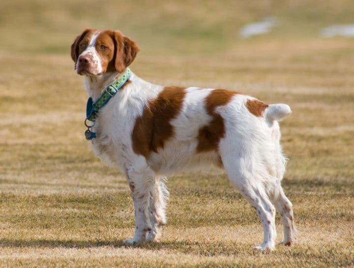 Perros aptos para practicar running