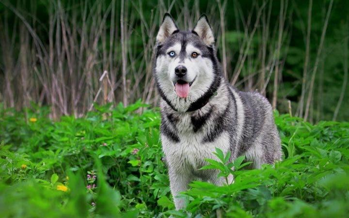 Los mejores perros para correr
