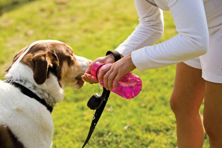 Hidratar a tu perro si sales a correr con él