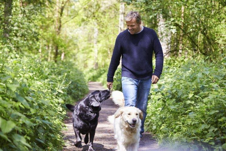 Razas de perro que si pueden correr