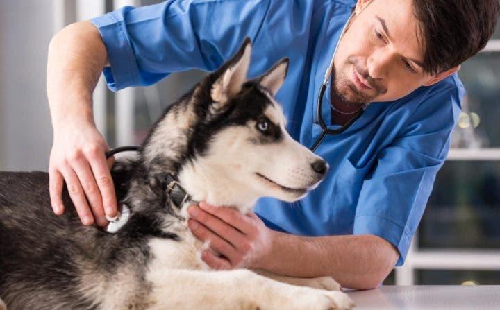 Cuidar a tu perro si sales a correr con él