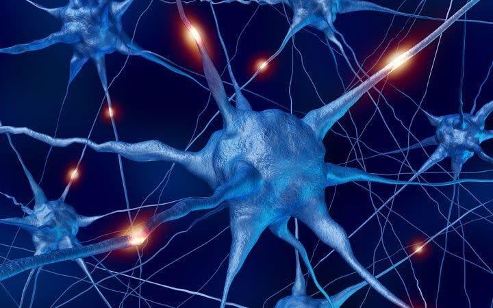 El sedentarismo provoca daños en el sistema neuronal