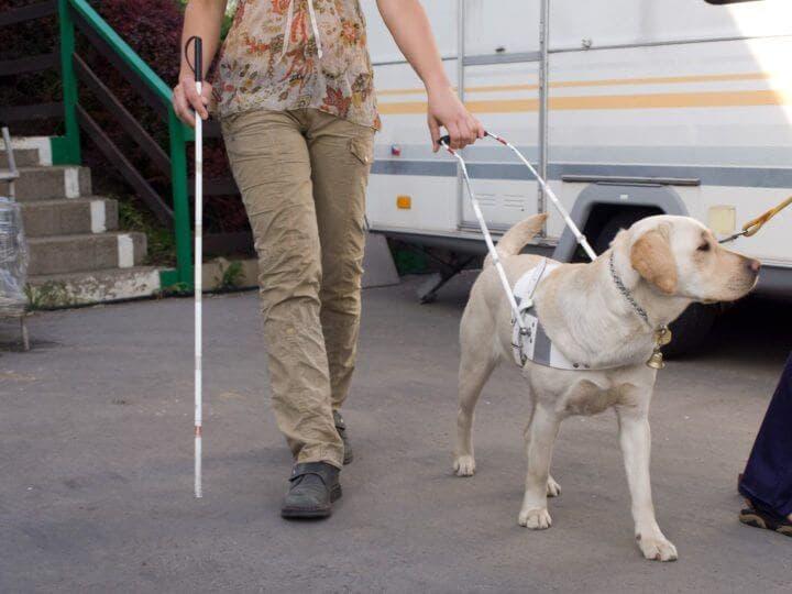 Servicio de transporte de perros lazarillo con Uber
