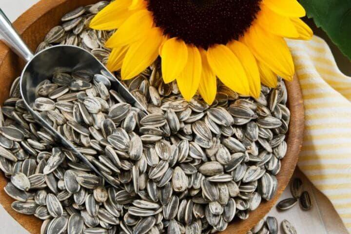 Las semillas de girasol son grasas insaturadas