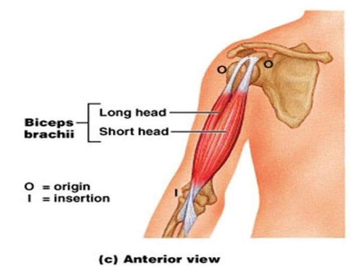 Cómo entrenar los músculos bilaterales de los brazos | Entrenamiento