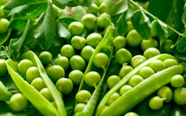 Las legumbres como el guisante contienen bastante fibra