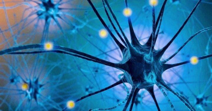 Conversión del triptófano en serotonina para mejorar estado de ánimo