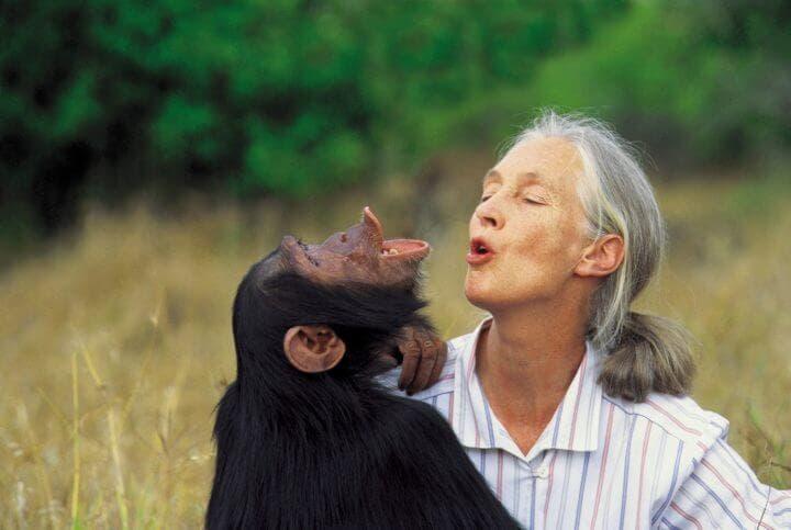 Hábitos extraños de Jane Goodall
