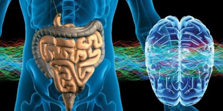 Rol de la nutrición entre estómago y cerebro