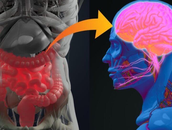 ¿Qué relación existe entre el estómago y el cerebro?