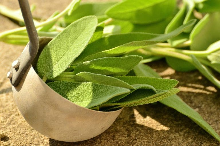 7 beneficios y usos de la salvia