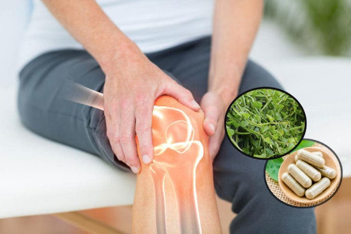 Beneficios óseos del Cissus quadrangularis
