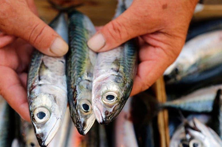¿qué pescado tiene la cantidad más alta y más baja de mercurio?