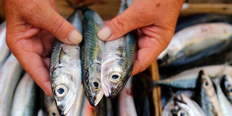 los peligros del mercurio en el pescado