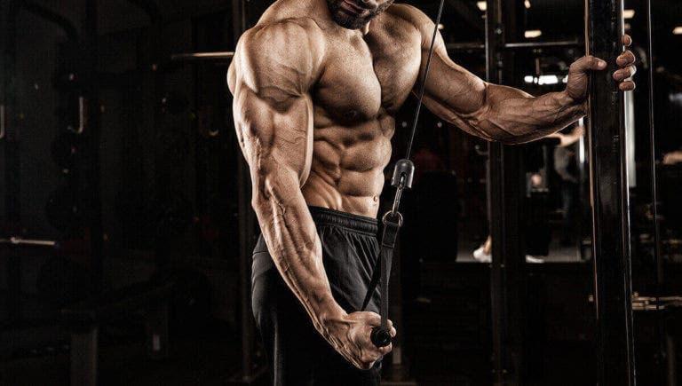 Guía para el entrenamiento del tríceps