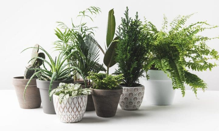 Plantas de interior que pueden purificar el aire