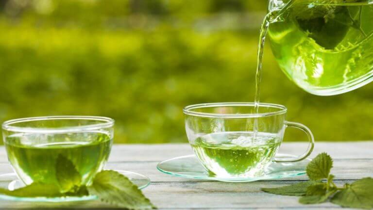 Las mejores hierbas para tratar trastornos del tracto urinario