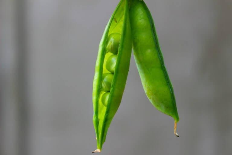 Las 7 legumbres más saludables para comer
