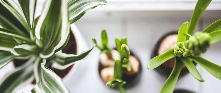Algunas plantas de interiores mejoran la calidad del aire
