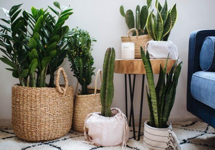 Las plantas de interior pueden mejorar la calidad del aire