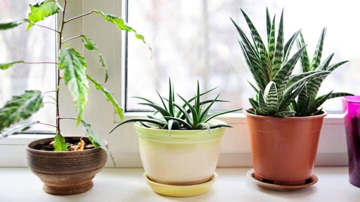 El aire de interiores puede purificarse con algunas especies de plantas