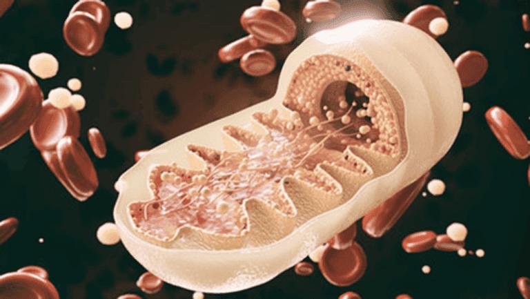 Qué son y para qué sirven las mitocondrias