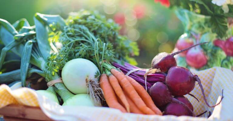 Dieta vegana y dieta basada en plantas