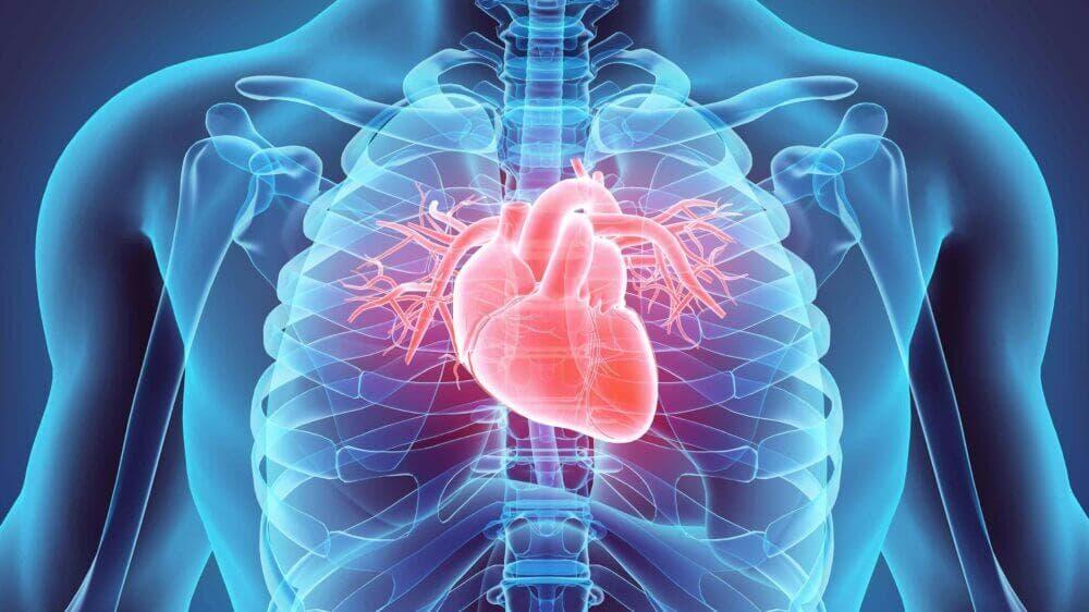 La avena puede prevenir las enfermedades cardiacas