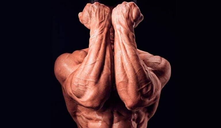 Cómo fortalecer tu agarre y la fuerza de tus antebrazos