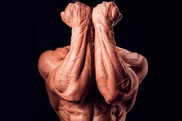 7 ejercicios para fortalecer los antebrazos y mejorar el agarre