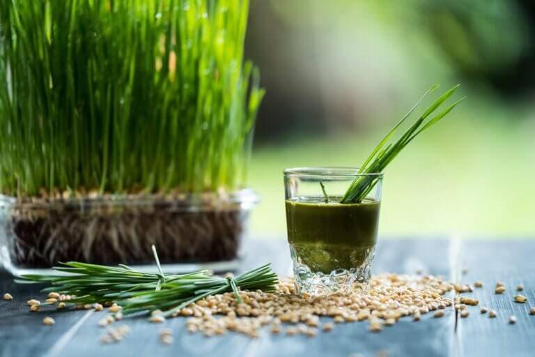 zumo de hierba de trigo