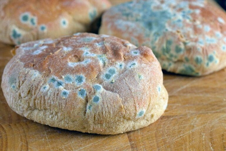 Es malo comer pan mohoso