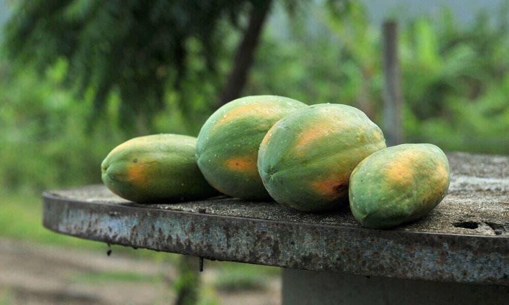 Beneficios al organismo por ingerir papaya