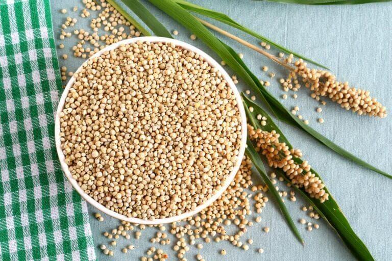 Sorgo, un nutritivo cereal