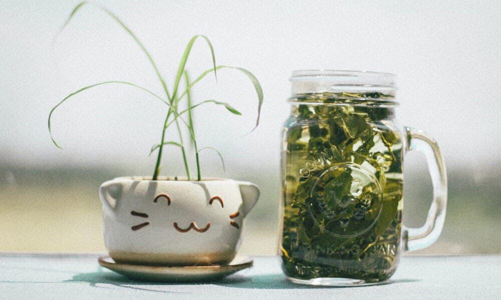 Beneficios del té verde para adelgazar y acelerar el metabolismo