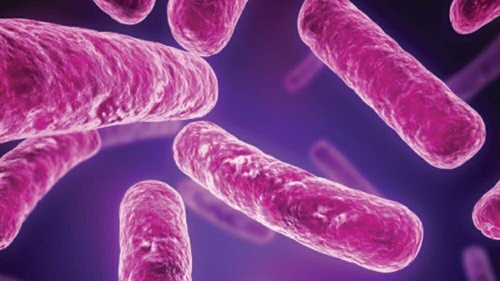El trasplante de heces combate la bacteria causante de la colitis